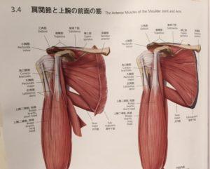 肩のワークアウトじゃなくても痛めてしまうほど、肩は繊細で痛め易い関節です